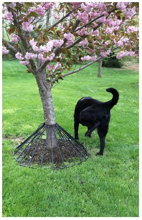 Dawg Tree Pee Guard Lawn Amp Landscape