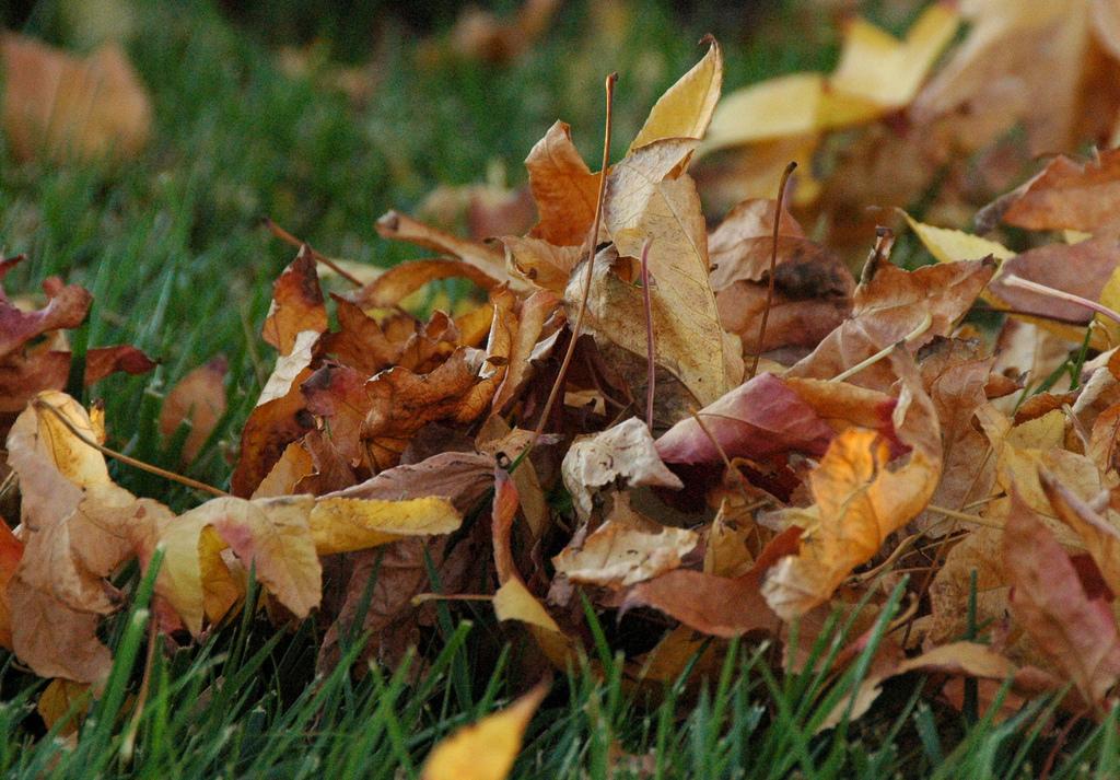 pile of leaves - 1024×713