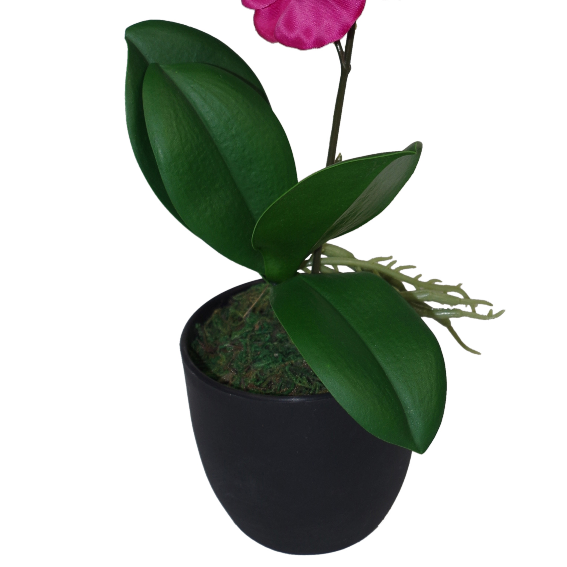 Indoor Plastic Plants