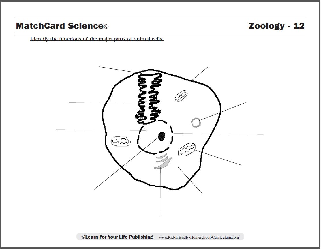 5th grade science cells worksheets ibookread Read Online