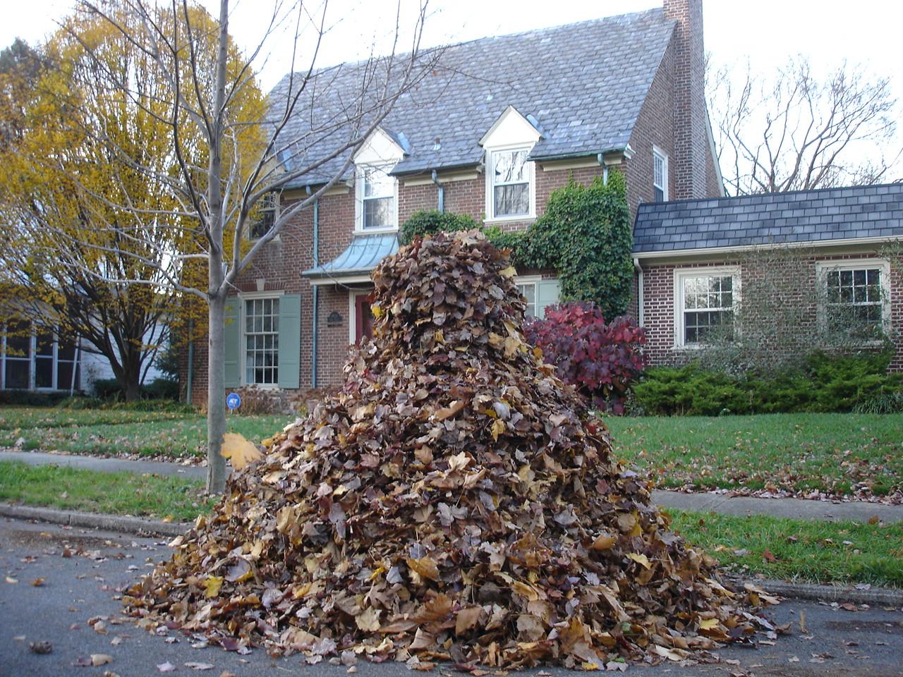 Best Way Rake Leaves