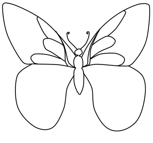 how to draw a butterfly phased pencil step 5