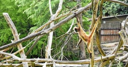 Pont-Scorff Zoo: a modern title for a modern start [Jeu] – Rewild and the Pont-Scorff Zoo