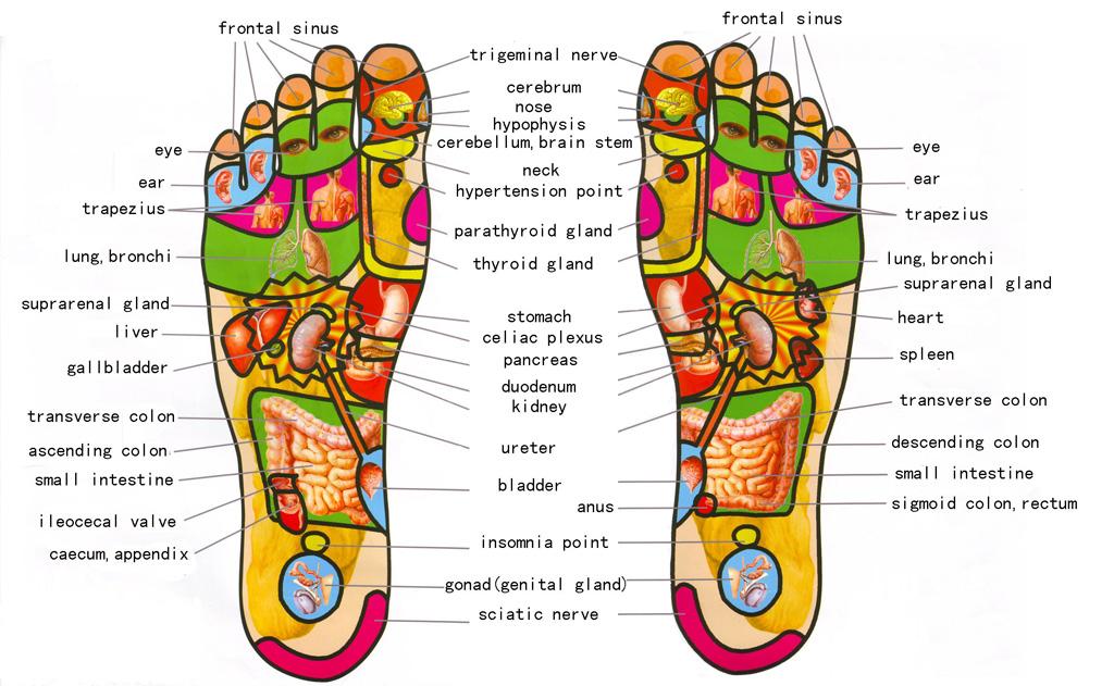 Pressure Points In Feet Diagram
