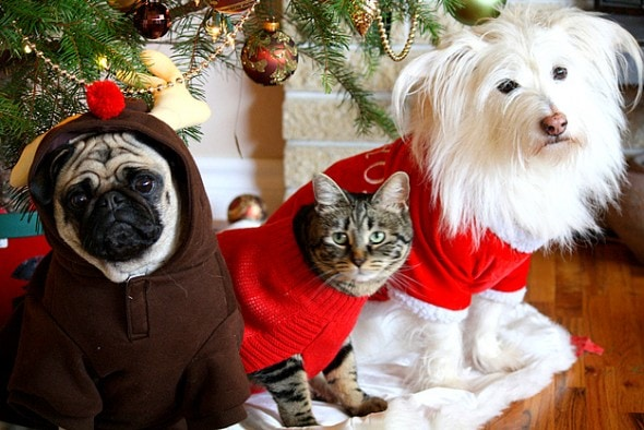 Christmas Pit Bulls And Cats