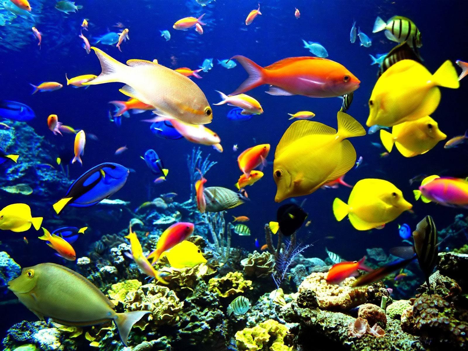 Aquarium Plants Toronto