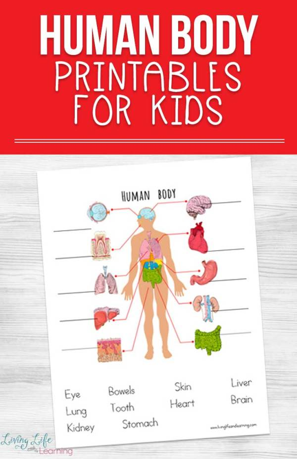 free printable parts of a body worksheets pdf # 20