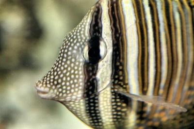 LIVING TRAVEL - AUSTRALIA - Queensland - Fish of the Great ...