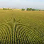 auction-sale_productive-farm-land-estate-north-central-illinois