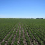 piatt-county-central-illinois-farm-land-auction_carter-trust_loranda-group