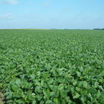 Christian County IL 90 Acre Farmland Listing Photo
