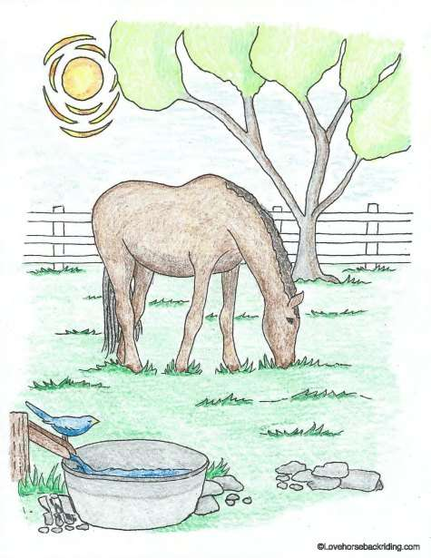 realistic horse coloring pages # 15