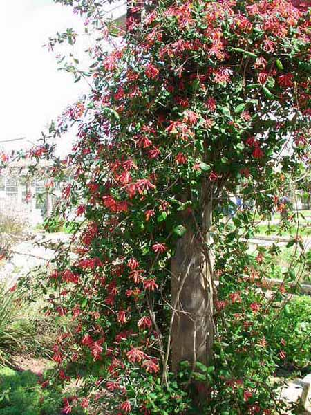 Latest Garden Design Ideas