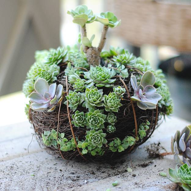 Unique Succulent Pots