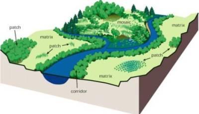 Ecología del paisaje y Biogeografía: Islas Inmersas en ...