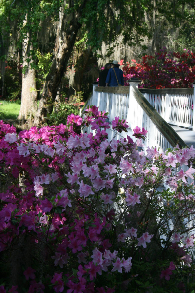 What S Blooming In April At Magnolia Plantation And