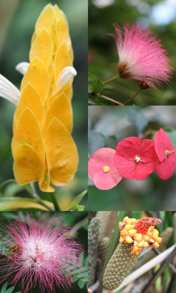 Flowering plants in Costa Rica