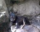 perro-gomera