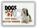 Dogs 101 - Small Basset Griffon Vendeen