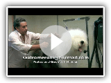 Old English Sheepdog Part 1 of 3