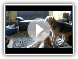 Rocky the Otterhound: Otterhounds got Talent.