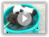 Enchanted with water water dog puppies. theradana