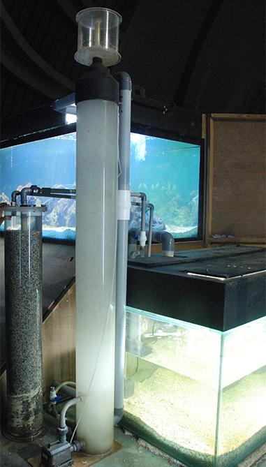 Pond Modern Fish Design
