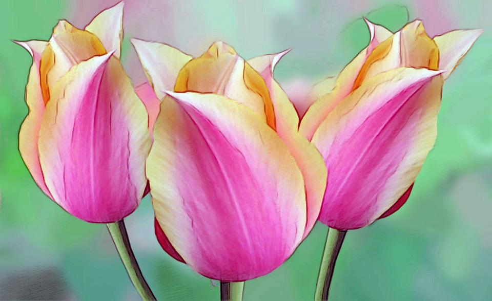 Free photo Flowers Easter Drawing Plant Arrangement Tulips   Max Pixel Drawing  Tulips  Flowers  Arrangement  Plant  Easter