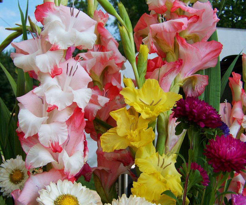 Free photo Gladiolus Bunch Of Flowers Cut Flower   Max Pixel Bunch Of Flowers  Gladiolus  Cut Flower