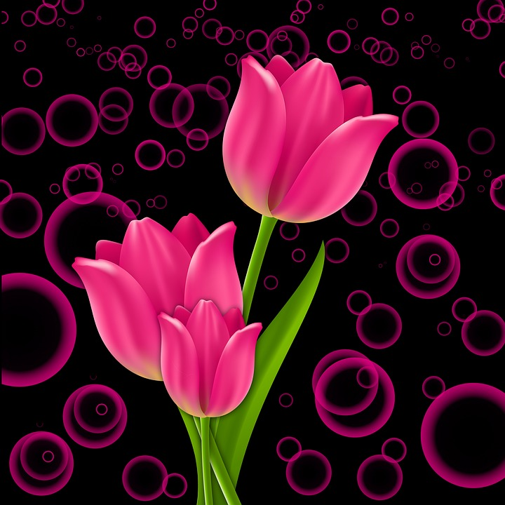 Free photo Plant Pink Background Flowers Tulip Tulips Flower   Max Pixel Plant  Flowers  Flower  Tulip  Tulips  Pink  Background