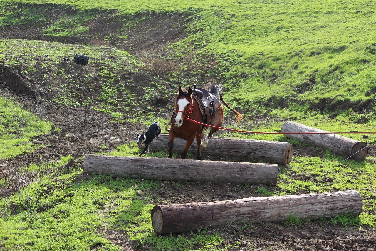 groundwork horses - HD1280×853