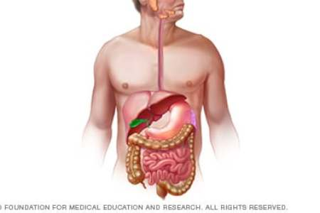 Images of model of digestive system 4k pictures 4k pictures human digestive system images and videos britannica com the abdominal organs are supported and protected by the bones of the pelvis and ribcage and ccuart Gallery