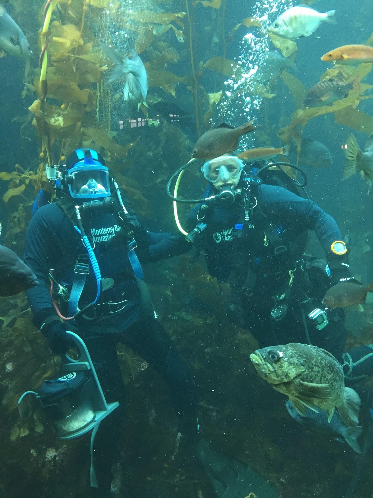 Scuba Diving In The Kelp Forest Exhibit Mbari
