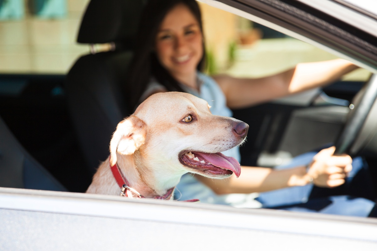 What Are Best Dog Car Seats