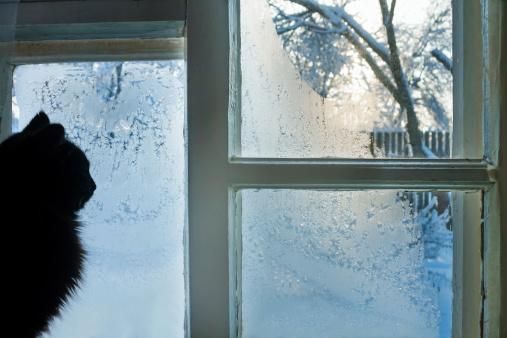 Frost Patterns Windows