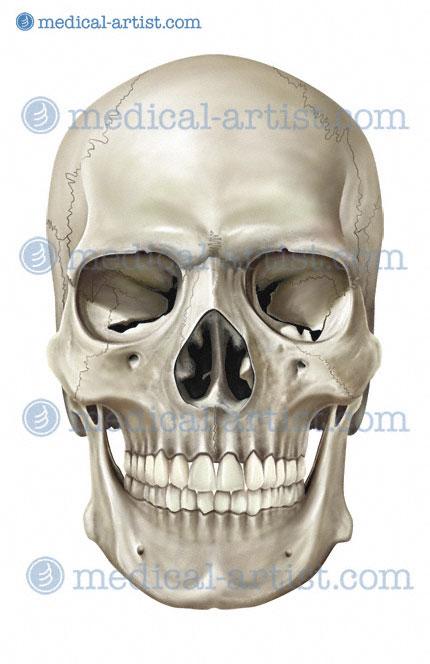 Easy Making Human Skull