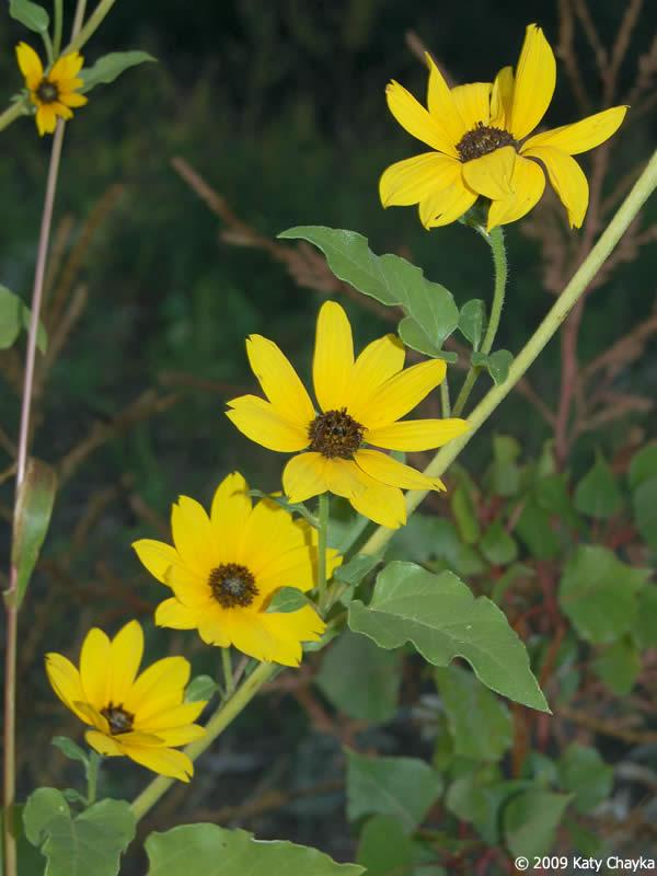 Yellow Leaves Indoor Plants