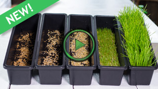 How To Grow Wheatgrass At Home Miracle Gro