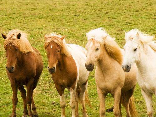 Horses Ponies Poems About And