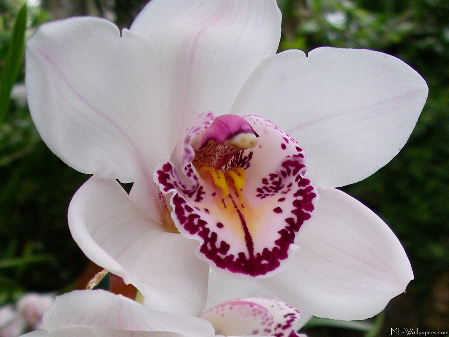 Bees Types Hawaii