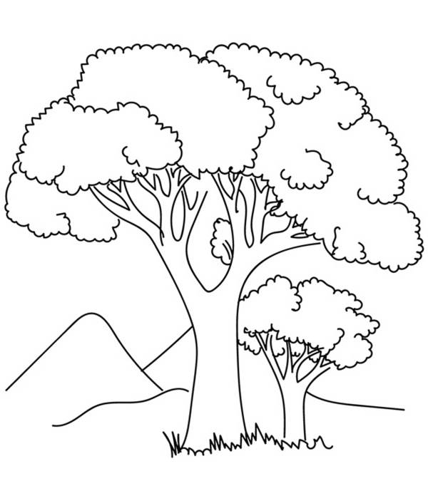 trees coloring pages # 0