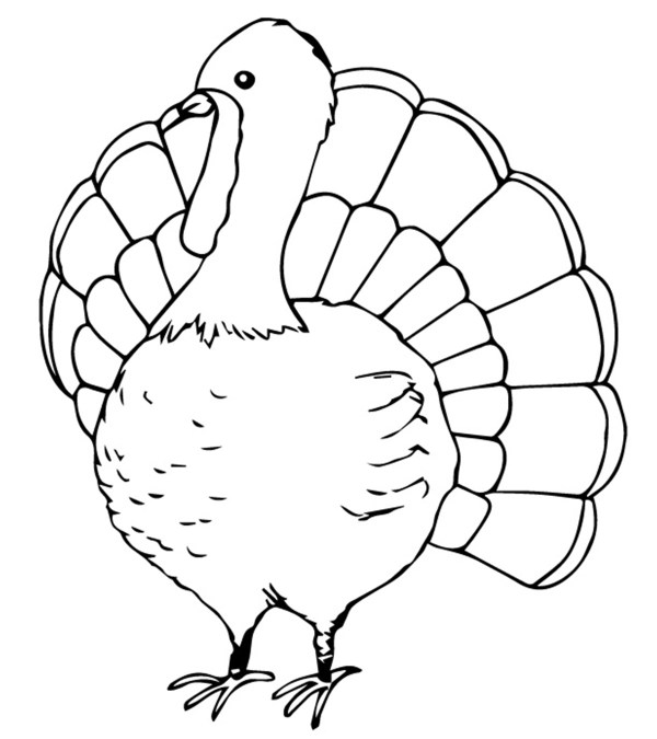 coloring page turkey # 10