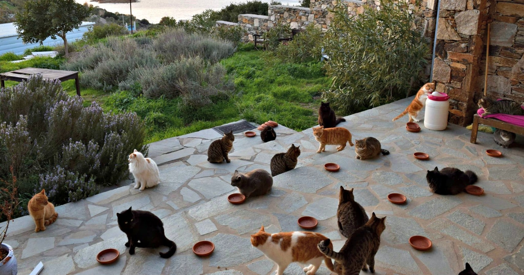 God's Little People Cat Rescue Need Someone To Care For ...