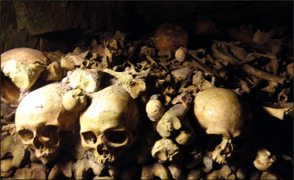 pile of bones - 1000×614