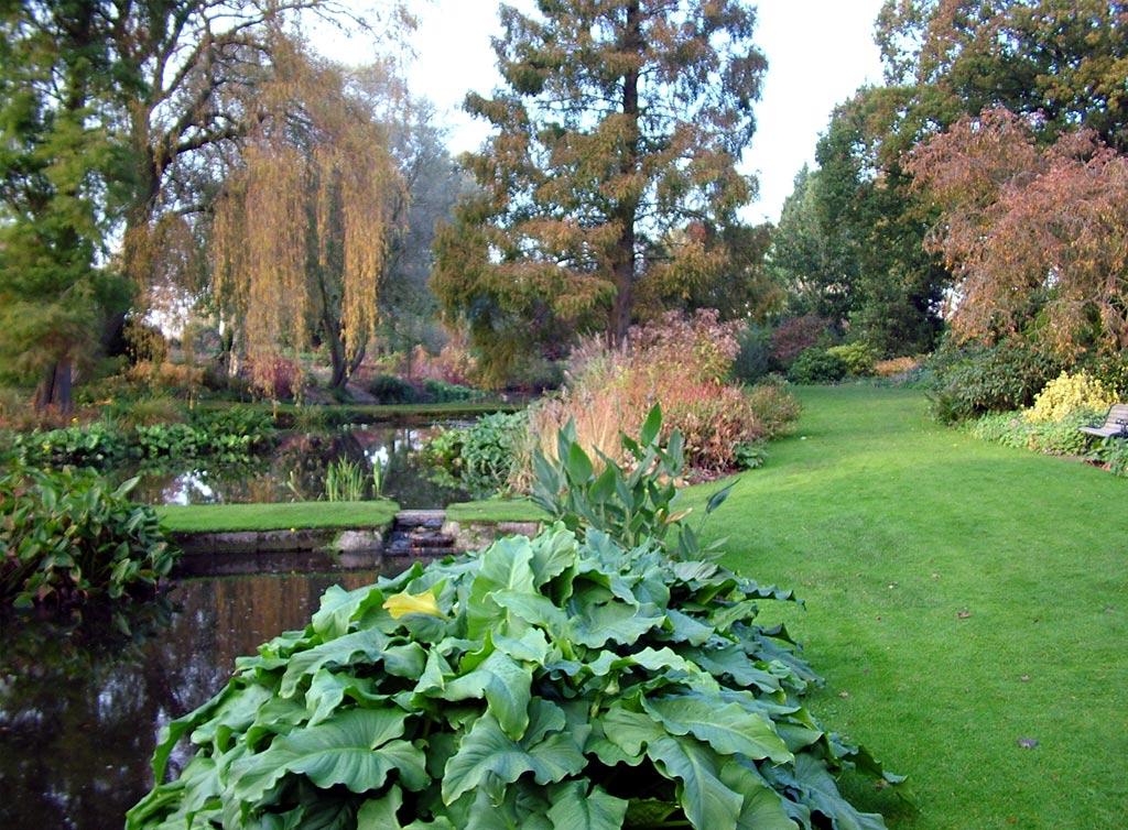 Pond Design Pictures