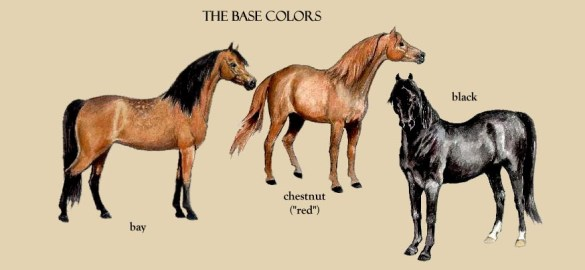 Morgan Colors  Your Information Station for Morgan Color Genetics     The original ancestral color of the horse was bay dun  All of the other  colors found in the equine species are the result of subsequent mutations  over