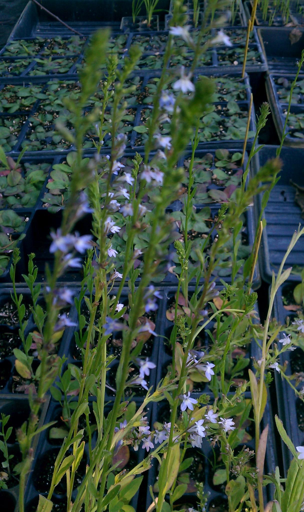Oblong Plant Pots