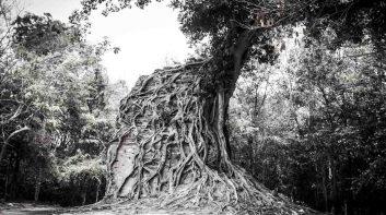 柬币(Riel)上的吴哥风景,您去过几个