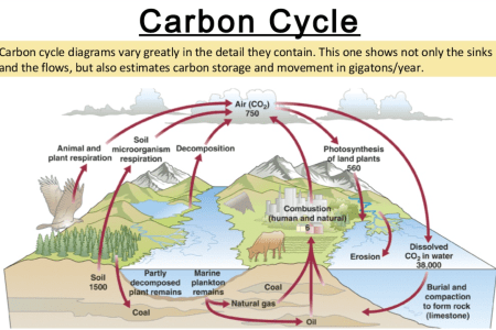 Map of carbon cycle 4k pictures 4k pictures full hq wallpaper xmind share xmind the most popular mind mapping software on the thumbnail of mind map nature s carbon cycle a carboncycle solved problem concept maps show ccuart Image collections