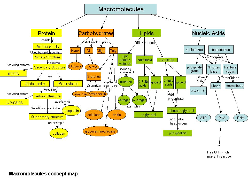 Concept Map Of Macromolecules.Nucleic Acid Concept Map